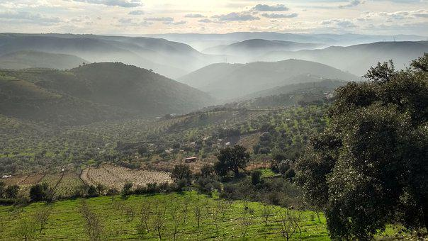 Misty Hills, Olive Trees, Mountains, Clouds, Landscape
