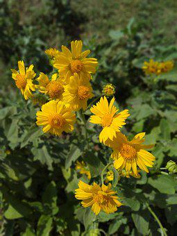 Nature Flower, Blur Background Flower, Yellow Flower