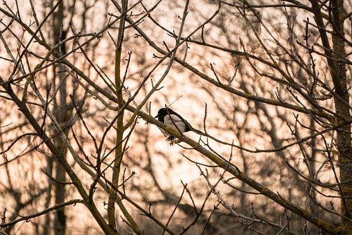 Naturephotography, Nature, Photography, Photooftheday
