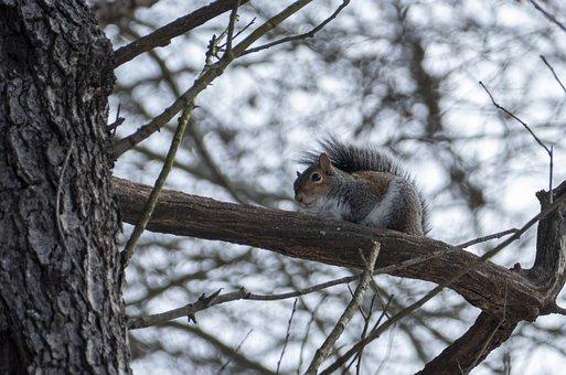 Squirrel, Animal, Mammal, Rodent, Nature, Wildlife