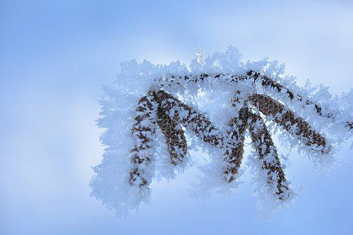 Winter, Pine Cones, Snowflakes, Hoarfrost, Forest