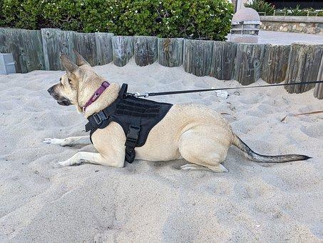 Dog, Beach, Sitting