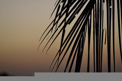Sunset, Nature, Leaf Leafs, Sky, Colors, Natural