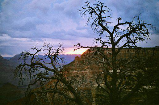 Grand Canyon, Cliff, Sunset, Silhouette, Tree, Geology