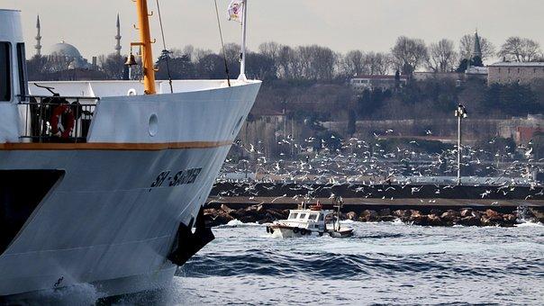 V, Boat, Seagull, Wave, Ferry, Marine, Marmara, See