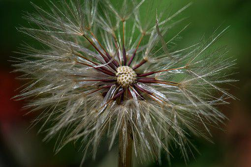 Thistle, Plant, Nature, Weed, Summer, Spiky, Blow