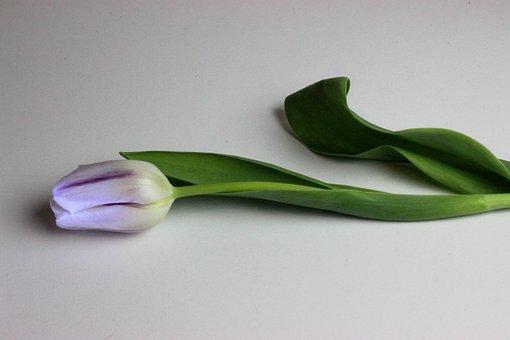 Green, Flower, Bloom, Floral, Blossom, White