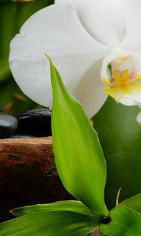 Orchid, Flower, Plant, Leaves, Bloom, Blossom