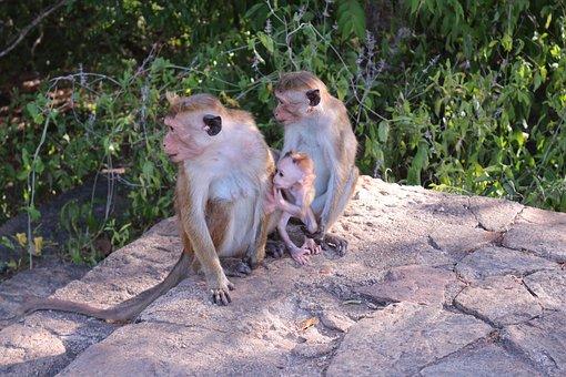 Monkey Family, Family, Ape, Baby, Animal World, Cute