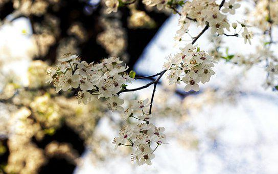 Flowers, Blossom, Groups, Tree, Branch, Twig, Petals