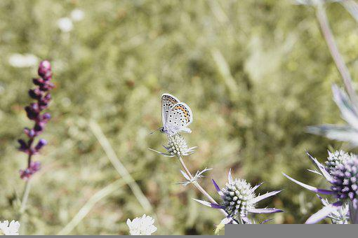 Nature, Flower Flowers, Grass, Forest, Macro, Leaf