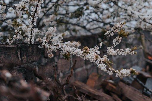 Flower, Nature, Vietnam, Travel, Wanderlust, Bloom