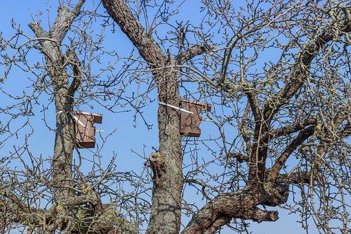 Tree, Nesting Box, Aviary, Bird Feeder, Nature