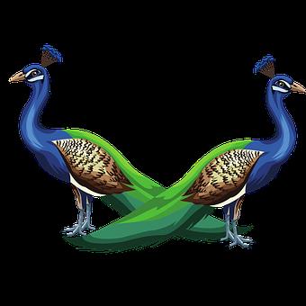 Peacocks, Birds, Animals, Peafowls, Indian Peafowls