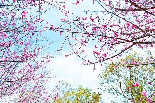 New Year, Spring, Plum Blossom