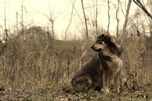 Motivational, Dog, Animal, Nature, Sad, Pet, St Bernard