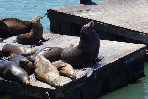 Seals, Dock, San Francisco