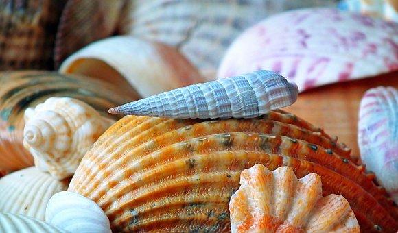 Shells, Cover, Sea, Ocean, Holidays, Nature, Seaside