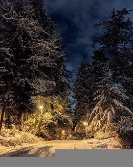 Snow, Stormy Night, Vancouver Island, Pine Trees
