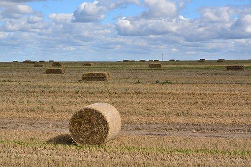 Hay Bale, Harvest, Field, Hay, Straw, Stubble, Rye