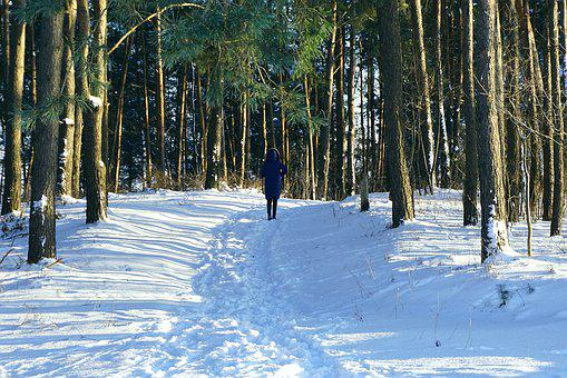 Coniferous Forest, Snow, Winter, Trail, The Path