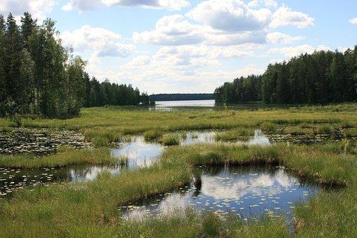 Finland, Taiga, Trees, Landscape, Water, Sky, Conifers