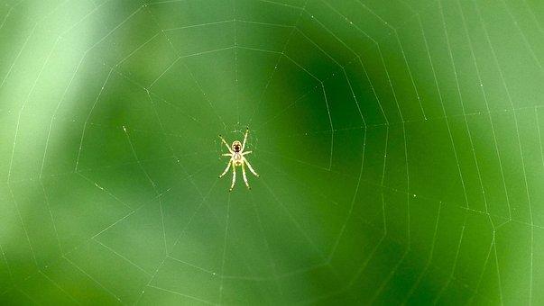Spider, Cobweb, Web, Arachnid, Animal, Wildlife
