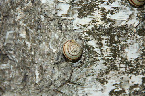 Snail, Bespozvonochnoe, Clam, Nature, Animal, Grey
