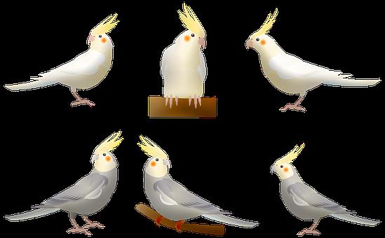 Birds, Parakeets, Animals, Budgie, Wildlife, Plumage