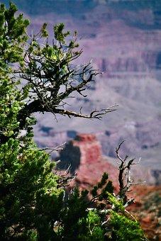 Grand Canyon, Bokeh, Cliffs, Arizona, Landscape