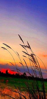 Purple, Orange, Red, Shadow, Dark, Evening, Cornfield