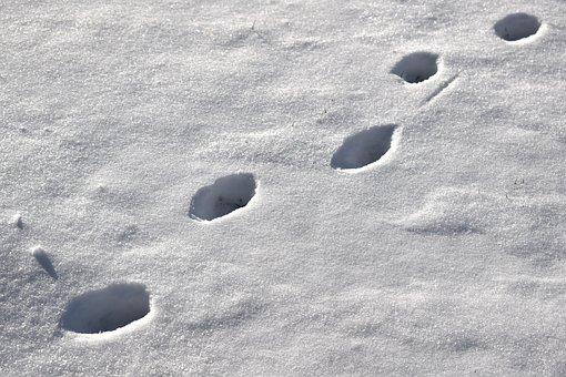 Footprint, Fingerprints, Snow, Cold, Winter, Cat, Walk