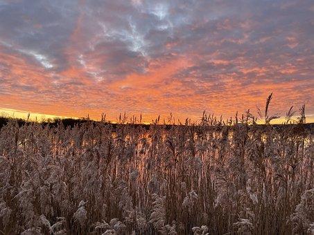 Reed, Field, Sunset, Sunrise, Grasses, Landscape, Calm