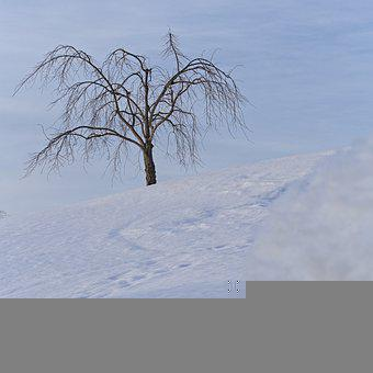 Tree, Snow, Path, Blue Sky, Winter, Landscape, Nature