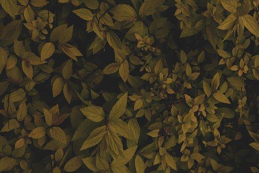 Flower Flowers, Nature, Leaf, Forest, Dark, Autumn