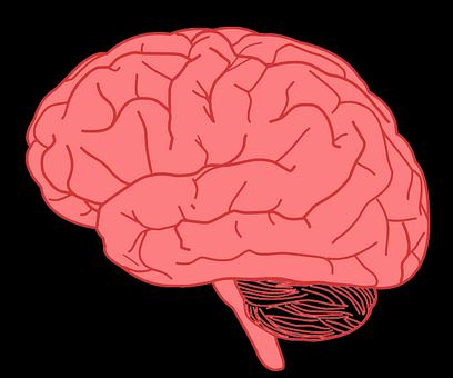 Brain, Mind, Organ, Human, Anatomy, Health, Meditation
