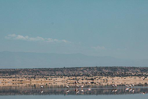 Lake, Mountains, Birds, Flamingoes, Water, Nature
