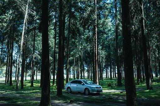 Forest, Trees, Nature, Landscape, Fog, Tree, Woods