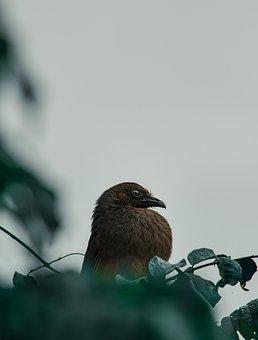 Bird, Ave, Nest, Nature, Plumage, Fauna, Birds
