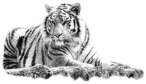 Tiger, Animal, Wood, Mammal, Big Cat, Wild Animal