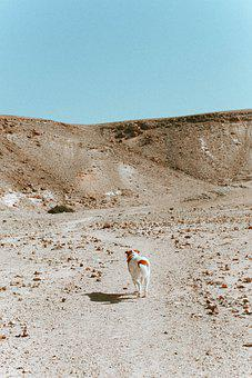Landscape, Desert, Wild, Nature, Travel, Traveling