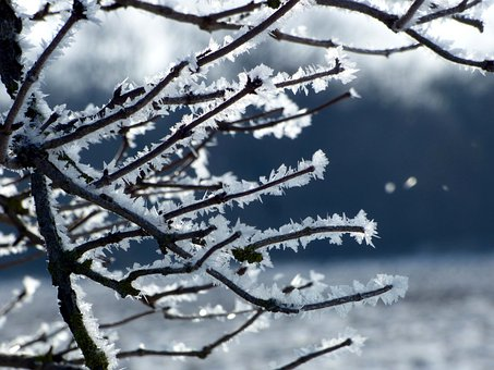 Branches, Tree, Winter, Gel, Nature, Wood, Light