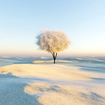 Tree, Desert, Sand, Cloud, Sunrise, Abstract, Surreal
