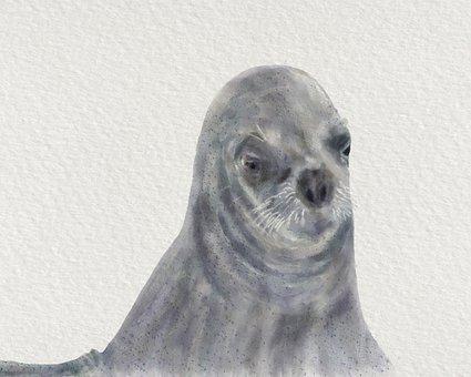 Seal, Mammal, Wildlife, Animal