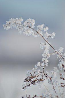 Plant, Grass, Ear, Barley, Ice, Snow, Ice Crystal