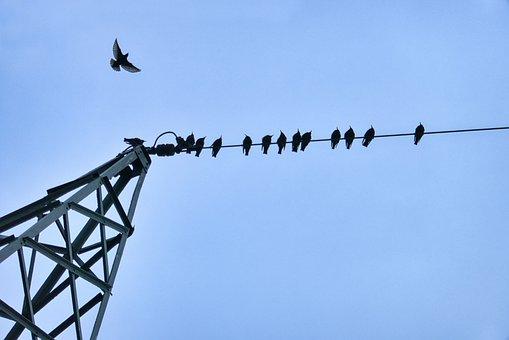 Birds, Crow, Flock Of Birds, Bird Gathering