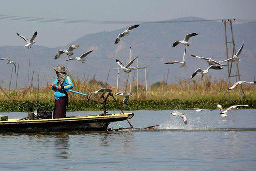 Gulls, Birds, Boat, Transport, River, Water, Myanmar