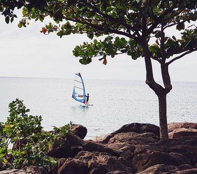 Sailing, Boat, Tree, Roche, Sea, Martinique, Cool