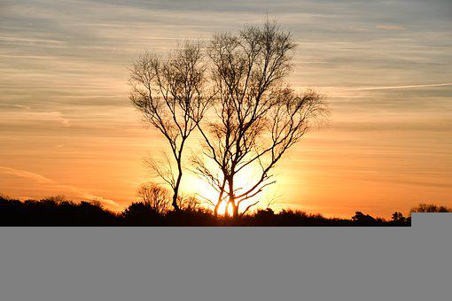 Sunset, Trees, Silhouettes, Sky, Clouds