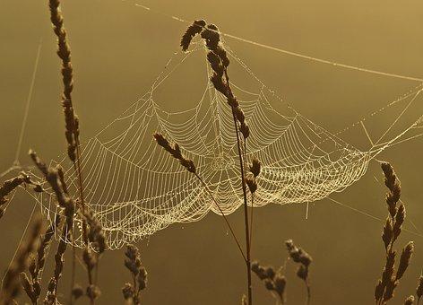 Spider Webs, Grasses, Nature, Cobweb, Autumn, Sunrise